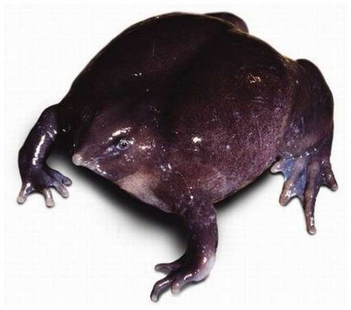 One-of-The-Rarest-Frogs-in-The-World-6