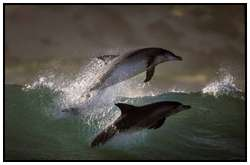 Photography-Of-Dolphins