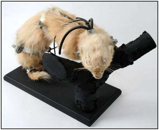 Steampunk-Taxidermy-by-Lisa-Black-1
