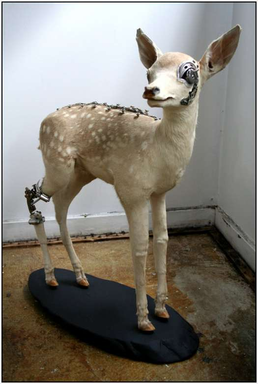 Steampunk-Taxidermy-by-Lisa-Black-11